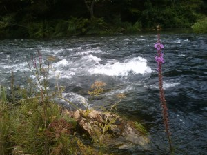 The River Eume, July