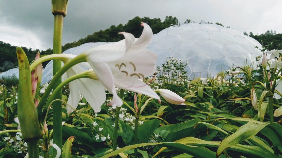 Lily at the Eden Project